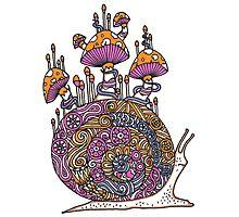 Mushroom Snail Photographic Print