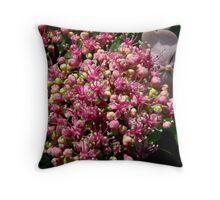 'Varigated Viburnum Bloom Macro' Throw Pillow
