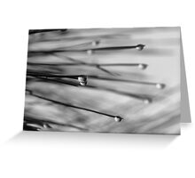 Dew Drops In Black & White Greeting Card
