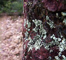 Rock Moss by abaybayan