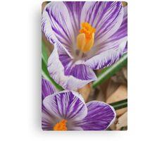 Purpled Sweet  Canvas Print
