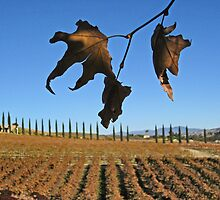 Southern California wine country in the winter by milton ginos