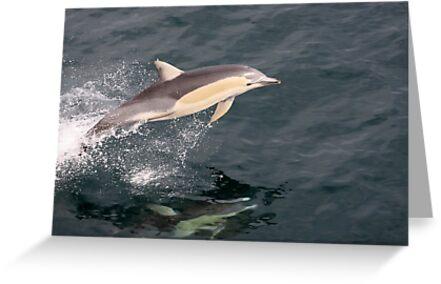 Dolphins by Pene Stevens