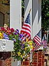 Flowers & Flags by Susan S. Kline