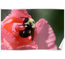 Pollen Protector Poster