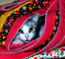 Undercover Cat by Rick  Bender