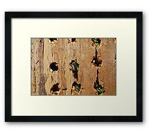 Leaf Cutter Bee Entering a Bee Condo Framed Print