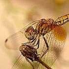 Dragonfly by Amran Noordin