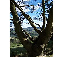 View from a Glentress tree  Photographic Print