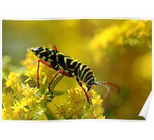 Locust Borer Beetle Yellow Spring Macro Poster