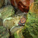 Butterfly in Stream by ienemien