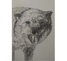 Arctic Fox Photographic Print
