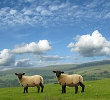 Lambs by Mike Paget