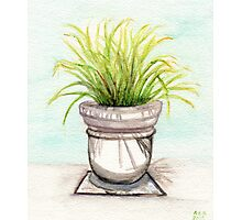 Fronds Photographic Print