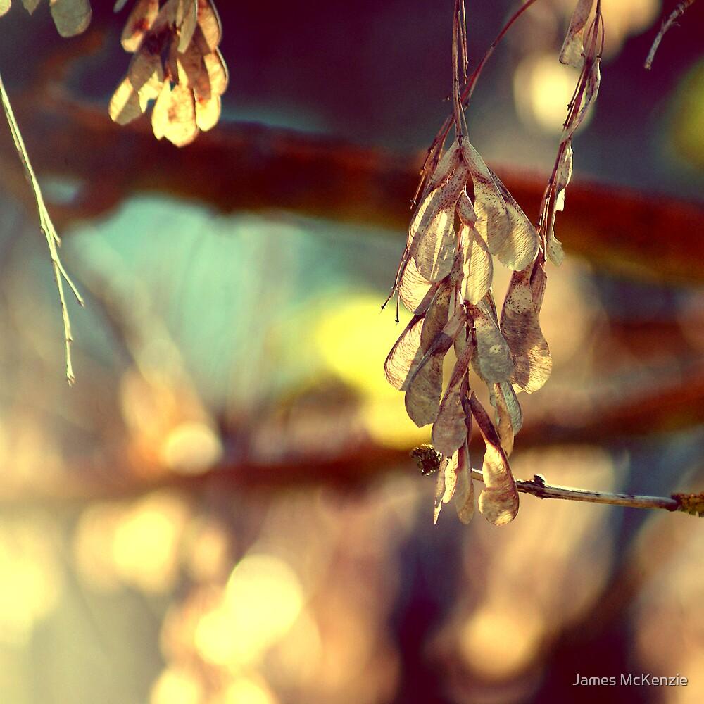Winter Light by James McKenzie