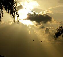 Warm Sunset by panda952