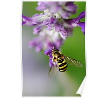 Little Hoverfly Poster