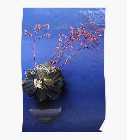 Plant against Blue Poster