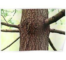Oz Tree Poster