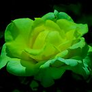 Going Green! by Carol Clifford