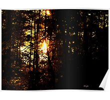 sun through the trees Poster
