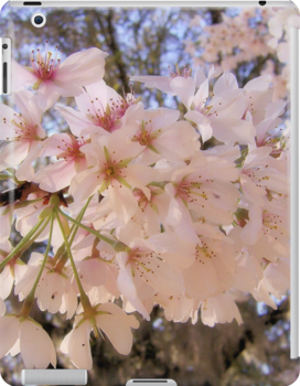 Cherry Blossoms by ©Dawne M. Dunton