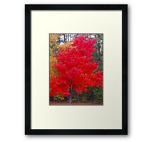 South Carolina Fall Glow Framed Print