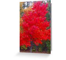South Carolina Fall Glow Greeting Card