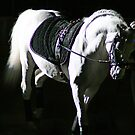 """""""Horse of Battle"""" - """"Horse of Ballet"""" by Fotography by Felisa ~"""