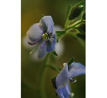 Twins (from wild flowers collection) Photographic Print