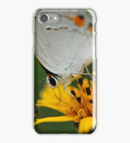 Hairstreak Butterfly Macro iPhone Case/Skin