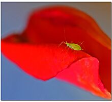 Green Aphid Photographic Print
