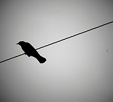 Bird on a Wire by Erin  Sadler