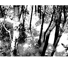 Gloom trees Photographic Print