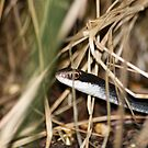 Snake in the Grass by Donna Adamski