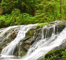 Kentucky Falls II by Debbie Roelle
