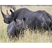 Inquisitive Rhino Photographic Print