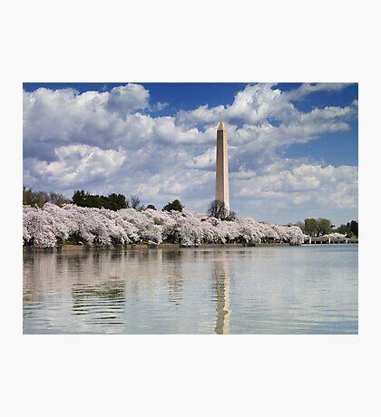 Cherry Blossoms on the Tidal Basin, Washington, D.C. Photographic Print