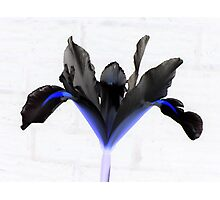 Black Iris Photographic Print