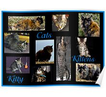 Cats, Kittens, Kitty Poster