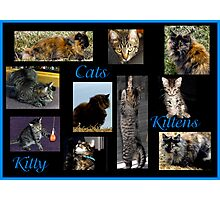 Cats, Kittens, Kitty Photographic Print