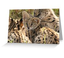 Serval family Greeting Card