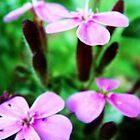 Purple Flowers by Mirafaye