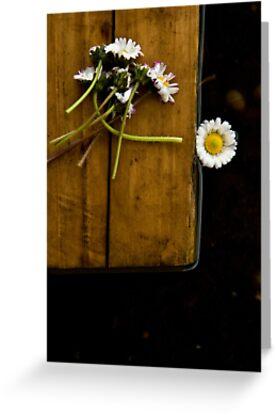 Daisies by Ilva Beretta