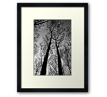 Blackened trees stand tall in the Yarra Ranges National Park Framed Print