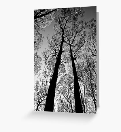 Blackened trees stand tall in the Yarra Ranges National Park Greeting Card
