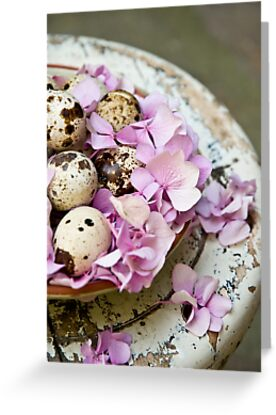 Quail eggs by Ilva Beretta