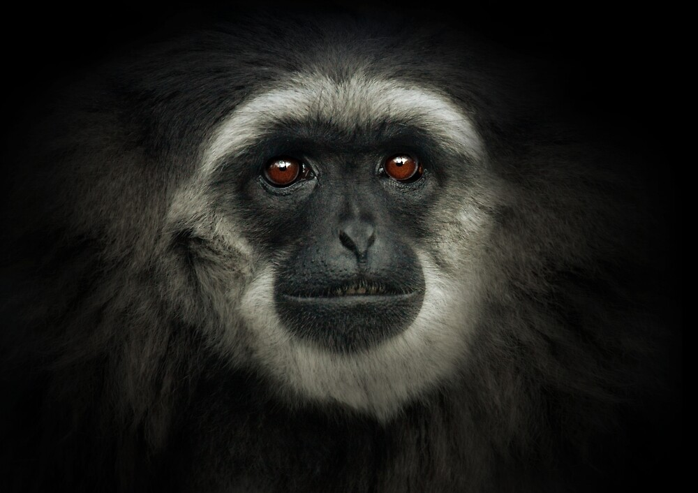 Silvery Gibbon by Natalie Manuel