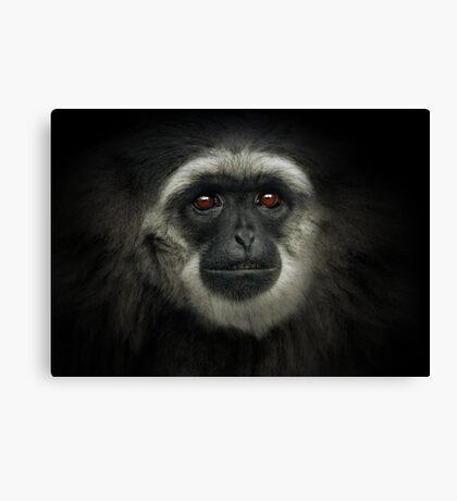 Silvery Gibbon Canvas Print