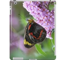 Common (Black) Jezebel, Delias nigrina iPad Case/Skin